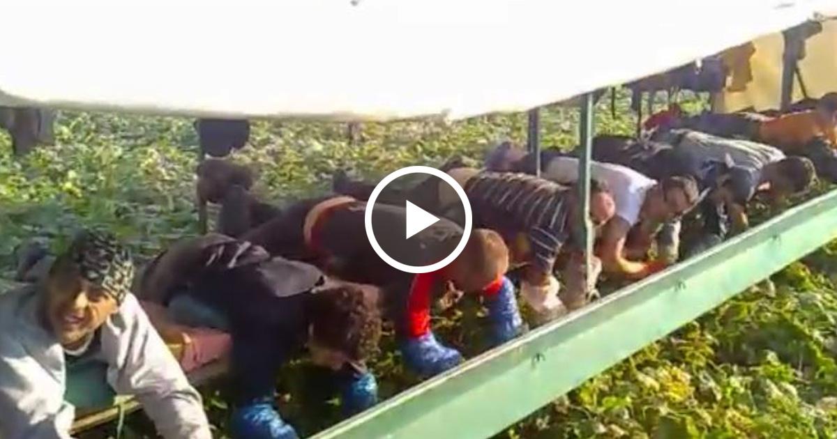 Uite în ce CONDIȚII INUMANE sunt ținuți ROMÂNII să lucreze în Germania.Ți se rupe inima.. vezi VIDEO